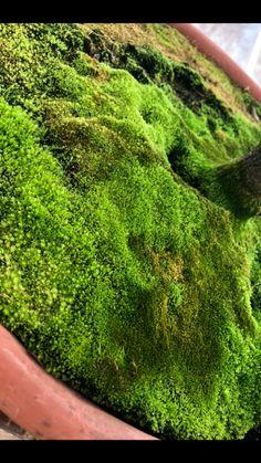 Greenhouse Pictures, Celery, Herbs, Vegetables, Herb, Vegetable Recipes, Veggies, Medicinal Plants