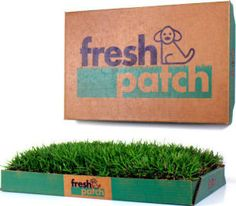 FreshPatch-real grass for your dogs! This will be great for our puppy since we're in an apartment :)))