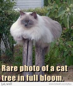 Cat tree. ...........click here to find out more http://googydog.com