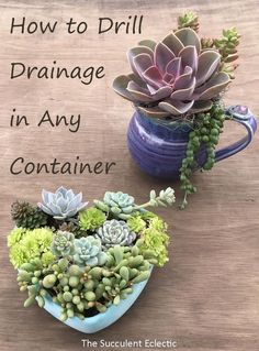 in Containers Without Drainage Drill Your Own Learn to drill drainage in ceramic and concrete. Now anything can be a beautiful succulent container!Learn to drill drainage in ceramic and concrete. Now anything can be a beautiful succulent container! Growing Succulents, Succulents In Containers, Container Plants, Cacti And Succulents, Planting Succulents, Container Gardening, Planting Flowers, Watering Succulents, Propagating Succulents