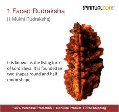 1 Faced Rudraksha