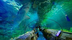 Showing item 10 of 13. Sydney Aquarium - Sydney - Tourism Media