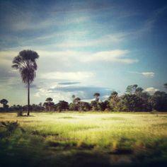 Sulawesi tenggara's savannah