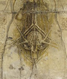 """Life and Death  """"I reveal to men the origin of the first, or perhaps second cause of their existence."""" - Leonardo da Vinci"""