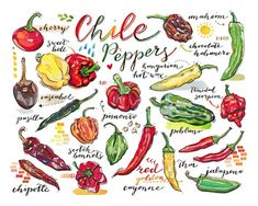 Items similar to Chile peppers print. on Etsy Food Technologist, Chili Cook Off, Garden Journal, Food Illustrations, Illustration Art, Stuffed Hot Peppers, Fine Art Paper, Food Art, Kitchen Decor