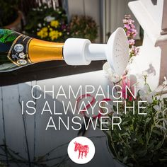 #champaignshower #garden #balkony #donekyproducts