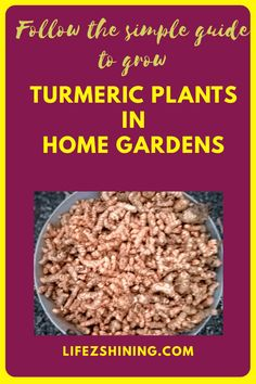 Turmeric plants for home gardens, simple tips to grow. - Lifezshining