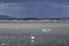 Sasali bird reserve occupies 8,000 hectares of land on the northern part of Izmir bay and is home to over 200 kinds of birds.Flamingos are among them ;notice the color is light pink ,almost white .The color of the flamingo depends on their diet.