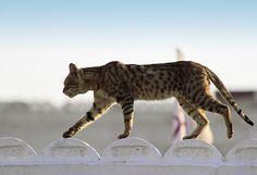 a cat roaming around -