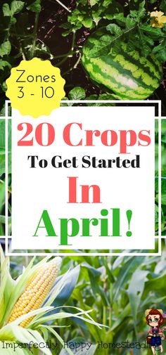 20 Crops to plant in your garden in April. Planting in spring for a late spring and summer harvest!
