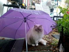 cat umbrella...