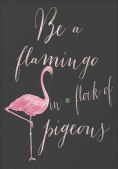 Always be a flamingo!!!