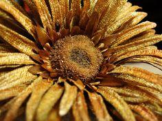 ~Golden Autumn Day~
