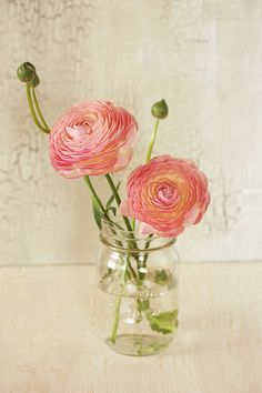 Ranunculus | Available in a rainbow of colors, having multiple layers of delicate, crepe paper thin petals and delicate fern-like foliage