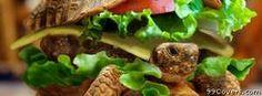 turtle burger Facebook Cover