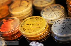 Up close with some petri dishes.