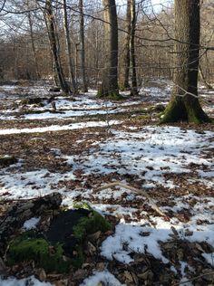Forêt paysage hiver