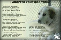 I started crying. PLEASE don't abandon a family member. Once you let them into your home, they stay forever, until the very end. Then they live in your heart forever. Adopt don't shop!!