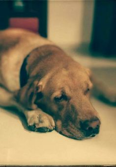 Pet love#Photo maniac