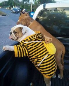 The Loyal Bulldog Puppy And Kids Cute Funny Animals, Funny Animal Pictures, Cute Pictures, Funny Photos, Animals And Pets, Baby Animals, Surf, Cute Dogs And Puppies, Doggies