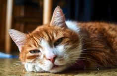Don't write off your cat's unusual behavior as a cry for attention – it could be a cry for help!