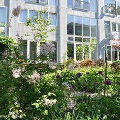 Rotterdam || Urban garden of Het Wallisblok (Dichterlijke Vrijheid) Rotterdam