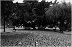 Atrapados por la imagen: Loma Verde