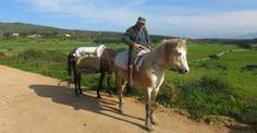 #Levanzo è un antico borgo marinaro, formato da un insieme di casette affacciate su un piccolo porticciolo. Levanzo è quasi priva di strade asfaltate, si estende per 10 km (è lunga appena 5 km e larga 2 km) e conta circa 200 residenti. E' un micromondo circondato dal Mediterraneo.  Levanzo, l'isola verde - | Il blog di Marisa Leo | Il blog di Marisa Leo #sicilia #egadi #trapani