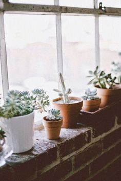 Indoor plants, cactus, and house plants. All the green and growing potted plants. Foliage and botanical design Indoor Garden, Indoor Plants, Home And Garden, Potted Plants, Cactus E Suculentas, Pot Plante, Plants Are Friends, Morning Ritual, Green Garden