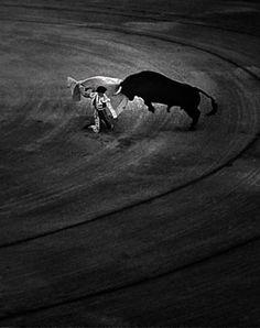 Un estudio revela por qué el toro no sufre en la Plaza