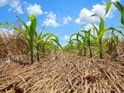 MACRO - AMBIENTE  : TECNOLOGIA SUSTENTÁVEL: PLANTIO DIRETO PRESERVA SO...