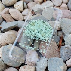Handmade mint green flower tree case Exquisite Hand Selected Natural Dried Pressed Flowers Handmade iPhone 4 4S 5 5S 6 / 6 Plus,SE, Samsung S3, S4, Galaxy s5 - Galaxy S6 , S 6 Edge, S6 Edge Plus, S7, S7 Edge, S7 Edge plus, Samsung A3, A5, A7, E7, Alpha G850, LG G3, Note 3, 4, 5, Expedia Z3/ mini, Z5/ mini, - Blossom TreeCrystal Clear Case. Accessories Phone Cases