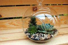"""5"""" Terrarium with 4 Succulents, Sand and Rocks - Natural Look - One DIY Kit"""
