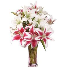 Order Lilies Flowers online from Pickupflowers. Free Lilies Flower delivery across Greece includes Roses, Lilies, Mixed bouqets. Father's Day Flowers, Wax Flowers, Order Flowers, Send Flowers, Online Flower Shop, Flowers Online, Asiatic Lilies, Stargazer Lilies, Flowers Delivered
