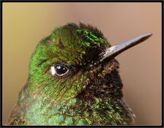 "Hummingbird ""Dude! seriously?"""