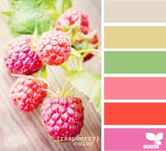 Design Seeds celebrate colors found in nature and the aesthetic of purposeful living. Design Seeds, Colour Schemes, Color Combinations, Colour Palettes, Spring Wedding Colors, Spring Colors, Raspberry Color, Color Palate, Colour Board