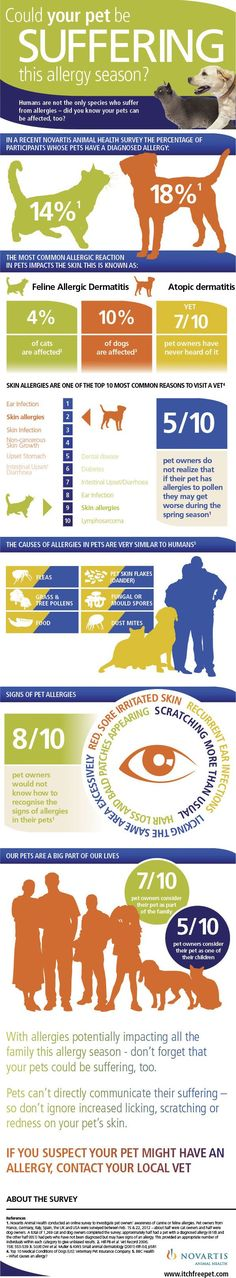 Could your pet be suffering from allergies? Check out this infographic to find out