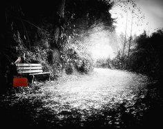 Park Bench  Black & White Photography  by MScottPhotography
