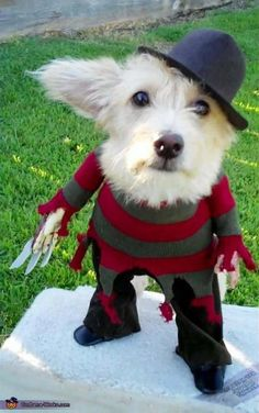 Doggie Krueger- Holy crap this is adorable.