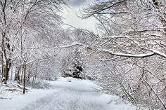 More snow in Toronto