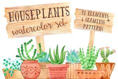 Watercolor houseplant set - Illustrations