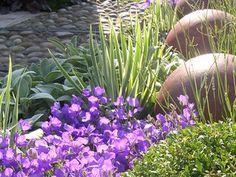 RHS Tatton Show Garden Contemplative Garden