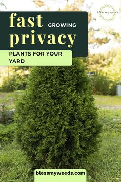 The Best Plant Guide For Privacy Plants (That Grow Fast) - Modern Design Fast Growing Privacy Shrubs, Shrubs For Privacy, Fast Growing Plants, Full Sun Landscaping, Low Maintenance Landscaping, Fence Landscaping, Landscaping Design, Backyard Plants, Garden Shrubs