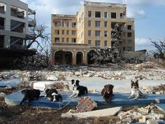 Image detail for -Five of the remaining 9/11 search and rescue dogs; Abby, Manny, Dawson ...