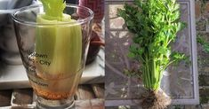 26 Really Clever Gardening Tricks No green thumb required.