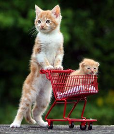 Awwwh. I want the background to be in a little kitty grocery store.