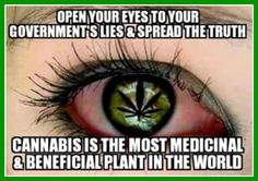 What the pharmaceutical conglomerates don't want you to prove. Medical Cannabis, Cannabis Oil, Weed Quotes, Marijuana Facts, Smoking Weed, Natural Medicine, Drugs, The Cure, Stoner