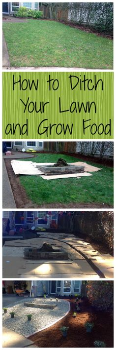 How to Ditch Your Lawn and Grow Food~ Who needs grass anyways? Grow food, not lawns! www.growforagecookferment.com