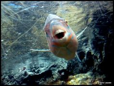 Rayong Aquarium. Thailand. TONE LEPSØES PICTURES