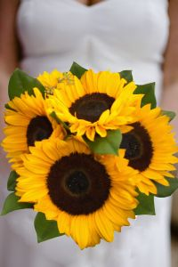 sunflower wedding bouquets and bridal bouquets. country weddings. Pure Happiness by Enchanted Florist in Taos, New Mexico. http://www.taosflorist.com/weddings/taos-wedding-flowers/